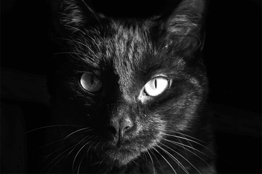 Kediye Kedi De(me)mek...