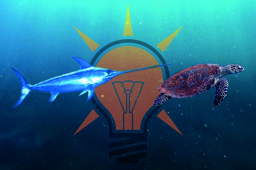 """""""Fikirde İktidar Olamadık!"""" İtirafını Tefsir Ediyoruz: Kılıç Balığı mısın, Su Kaplumbağası mı?"""